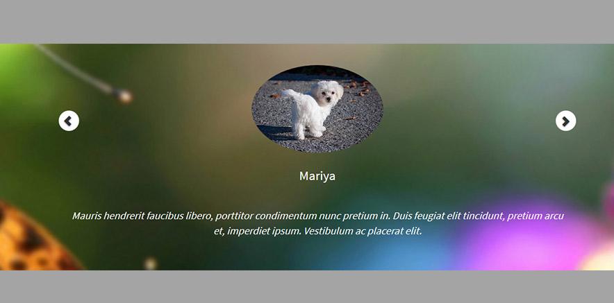 Slider in Pet care WordPress theme