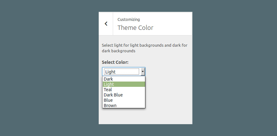 Customization options in WordPress theme